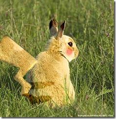 verdadero pikachu en www.judavi.com
